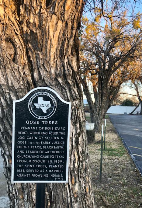 Gose Trees